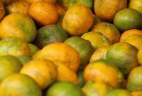 bisnis jeruk lemon medan